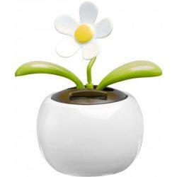 6730-02 - Floare solara